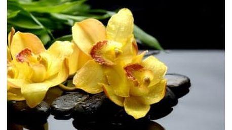 Žlutá orchidej