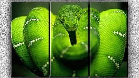 Zelený stočený had 3