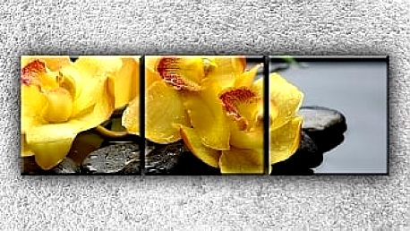 Žlutá orchidea na kamenech 3