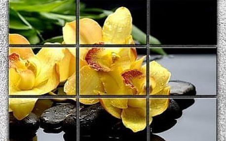 Žluté orchideje na kamenech 2