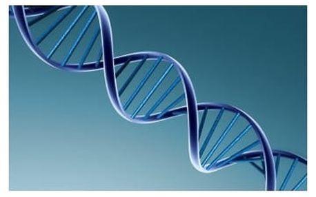 Šroubovice DNA