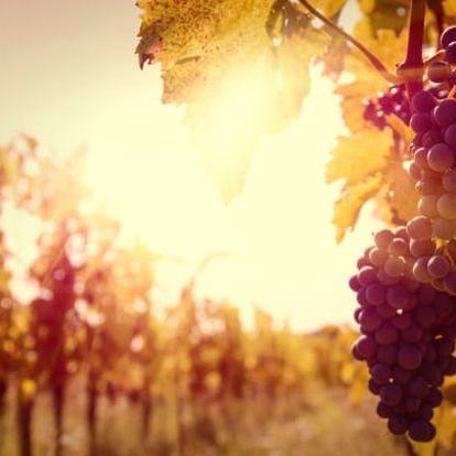 Jižní Morava s vínem neomezeně a polopenzí