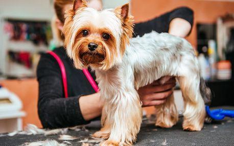 Koupání a stříhání psa v salonu Ronny