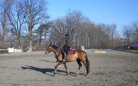 Koně - poprvé v sedle