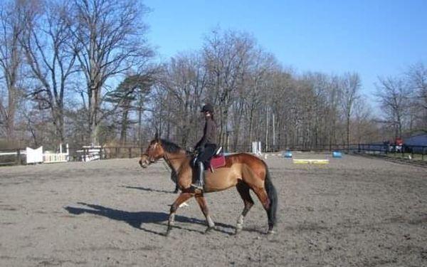 Koně - poprvé v sedle2