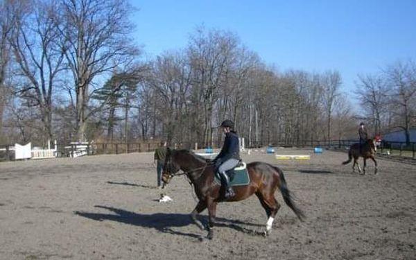 Koně - poprvé v sedle5