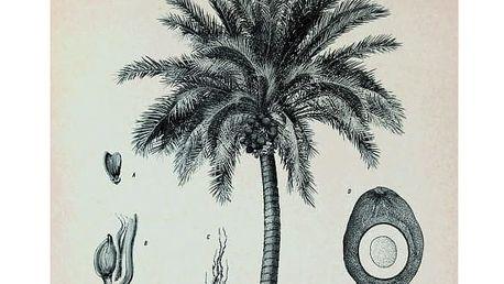 HK living Plátěný obraz s rámem Palm Tree M, černá barva