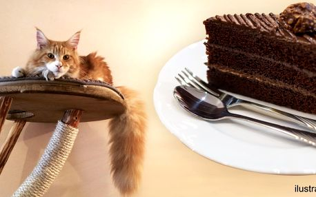 Kočky mají pré: káva a dezert v kočičí kavárně
