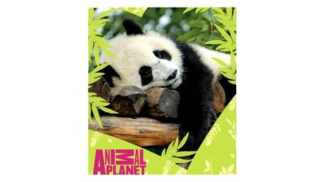 Carbotex deka Animal Planet Panda, 120 x 150 cm