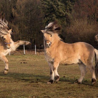 Vyjížďka na koních, kteří to nemají lehké