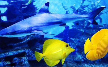 Pozdravte barevné rybky z Mořského světa