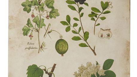 IB LAURSEN Botanický obraz Berries 46x60 cm, zelená barva, krémová barva, papír, dřevotříska