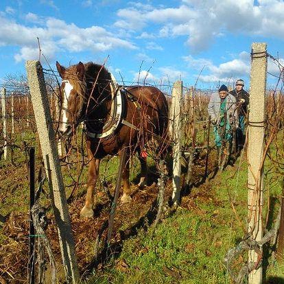 Bořetice: 3 dny pro dva s polopenzí a konzumací vín
