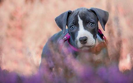 Focení psího mazlíčka pro krásnou vzpomínku