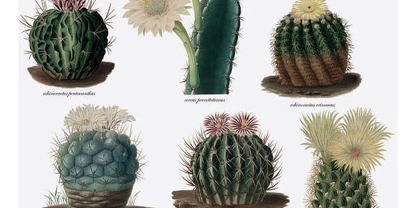 Utěrka na nádobí Magpie Botanical Cactus