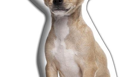 Polštářek Adorable Cushions Ušatá čivava - doprava zdarma!