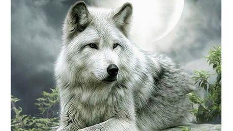 Obraz - vlk - dodání do 2 dnů