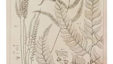 IB LAURSEN Botanický obraz Fern leaves 50x70 cm, krémová barva, papír, dřevotříska