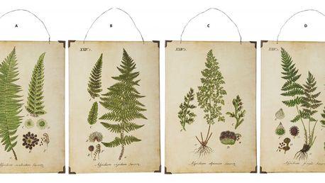 IB LAURSEN Botanický obrázek Leaves 24x34cm Typ D, zelená barva, dřevotříska