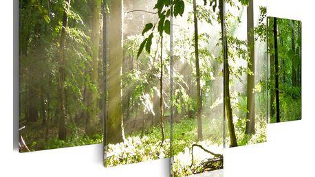 Obraz na plátně - Slunce mezi stromy 200x100 cm