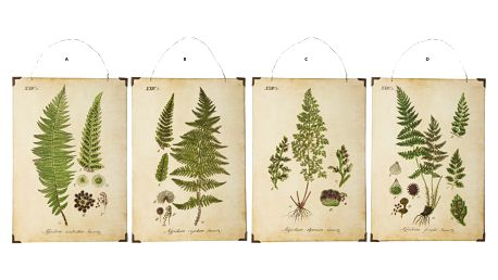 IB LAURSEN Botanický obrázek Leaves 24x34cm Typ B, zelená barva, dřevotříska (slevový kód JEZISEK24 na -24 %)