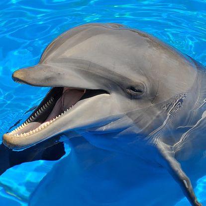 Jednodenní zájezd do Norimberka s návštěvou delfinária s delfíní show a místní ZOO.