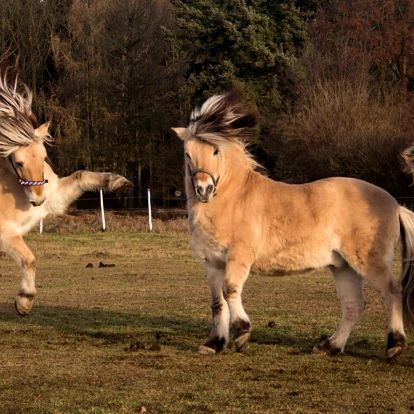 Jízda a výcvik na koních, kteří to nemají lehké