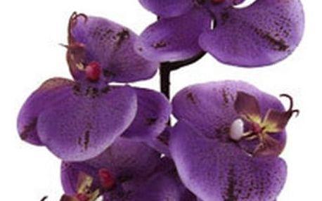 Orchidej gundula, 98 cm