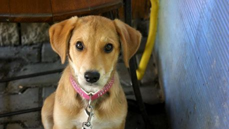 Voucher na pomoc opuštěným a týraným zvířatům
