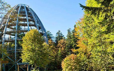 Do Bavorska: Stezka v korunách stromů a Pasov