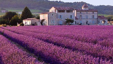 Semena francouzské levandule - 1000 ks