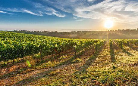 Jižní Morava s degustací deseti druhů lokálních vín, polopenzí i lahví lahodného vína
