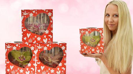 Dárková krabička s květem orchideje