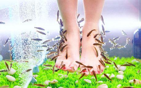 Péče o nožky: koupel s rybkami Garra Rufa