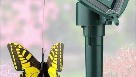 Solární motýl a pták