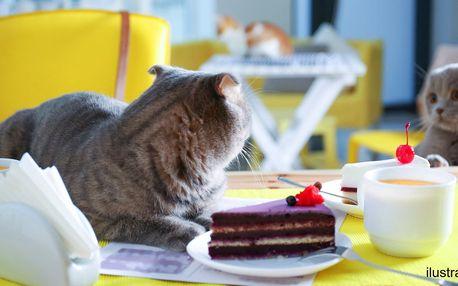 Čaj z čerstvého ovoce a dezert v kočičí kavárně