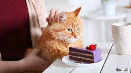 Máte rádi kočky? Káva a dort v kočičí kavárně