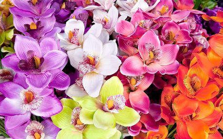 Výstava orchidejí v Drážďanech - doprodej
