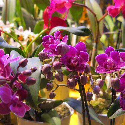 Last minute: Výstava orchidejí v Drážďanech