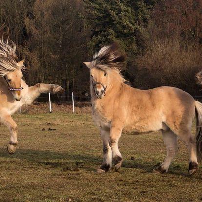 Březen na koni: Vyjížďka, jízdárna nebo svezení