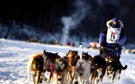 Den aljašským musherem