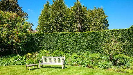 40 kusů sazenic habru obecného na živý plot + 0,5 kg speciálního hnojiva