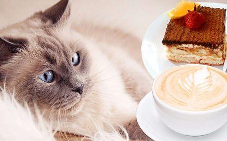 Teplý nápoj a domácí dezert v kočičí kavárně