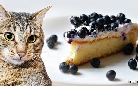 Káva a domácí dortík v kladenské kočičí kavárně
