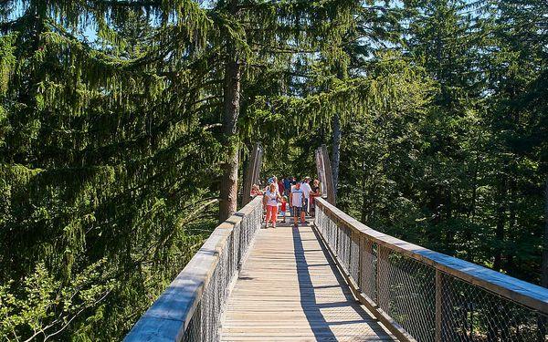 Stezka korunami stromů v německém Bavorsku