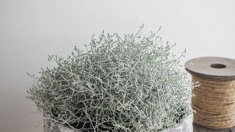Garden Trading Obal na květiny Withington 24cm, šedá barva, keramika