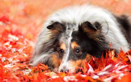 Fotografování psů v exteriéru: 15 fotografií