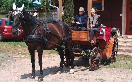 Jízda kočárem taženém starokladrubským koněm