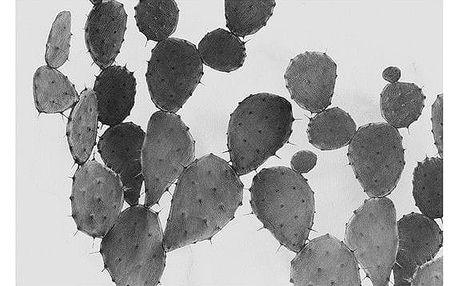 Magdalena Tyboni DESIGN Plakát Cactus 50x70 cm, šedá barva, černá barva, bílá barva, papír