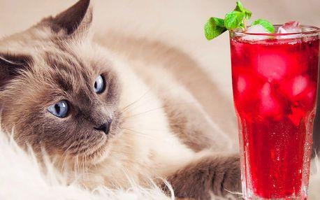 Ledové osvěžení a dezert v kočičí kavárně